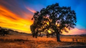 oak-tree-sunset