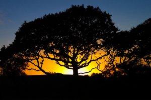oak-tree-sunset_1000